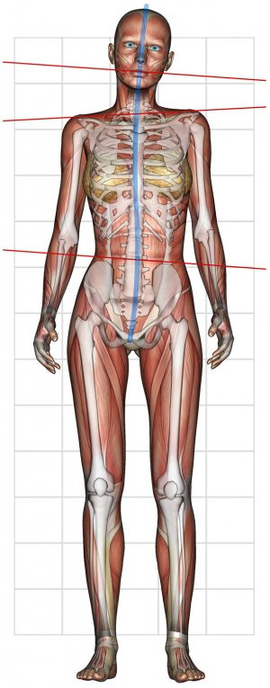 P-WALK posture and muscles